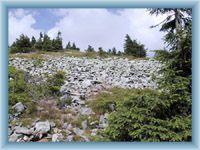 Kamenné moře pod vrcholem Králického Sněžníku