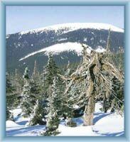 Pohled na Králický Sněžník