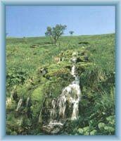 Prameny Moravice ve Velké kotlině