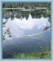 Velké mechové jezírko v rezervaci Rejvíz