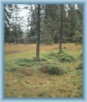 Rašeliniště Rejvíz