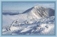 Sněžka ze Studniční hory