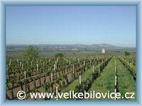 Velké Bílovice - Kaplička s vinohrady