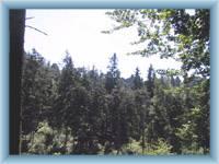 Vršky Jiráskových skal v lese