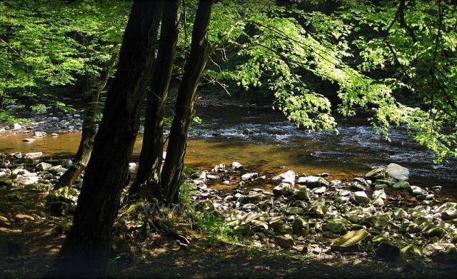 údolí Divoké Orlice z Litic na Potštejn