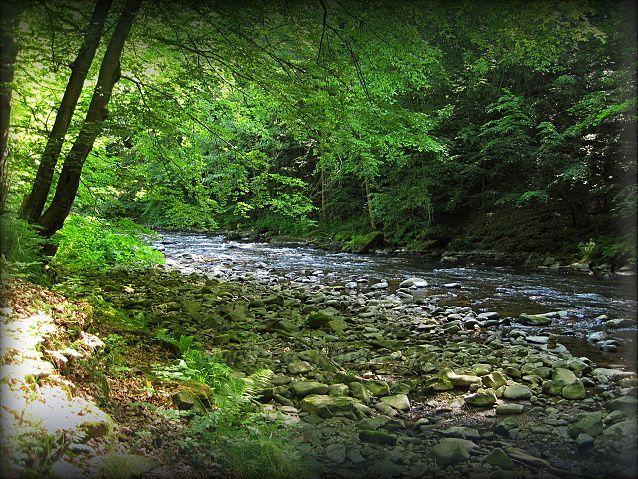 údolí Divoké Orlice