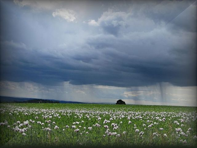 déšť v červnu