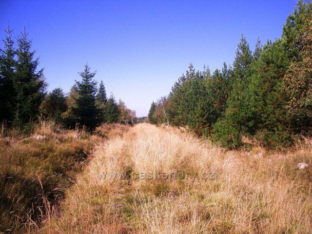 Jelení hora - pod vrcholm směr Kryštofovy Hamry