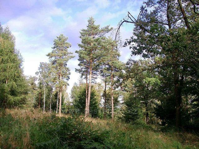 les u Sněžníku
