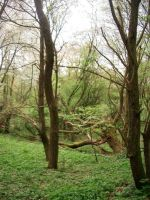 prales pod Vojkovickým Špičákem