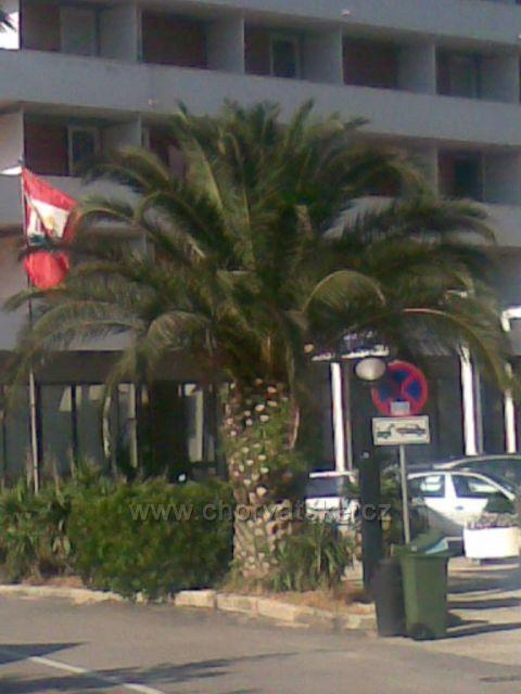 Krasná palma v Podgore