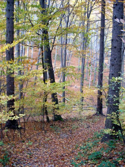 Jeseň v lese 1