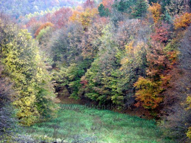 Jeseň v lese 2