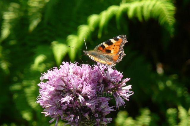 Jesenická fauna a flóra