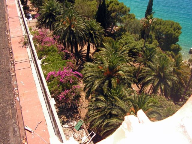 palmová zahrada u hotelu jadran...tučepi