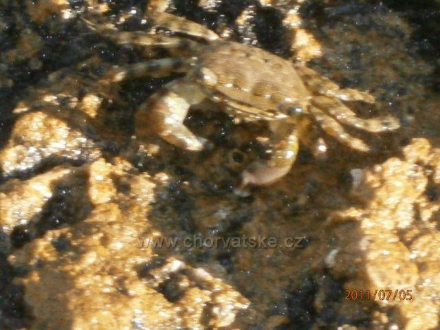 cestou z centra Viru je k vidění spousta krásných krabů
