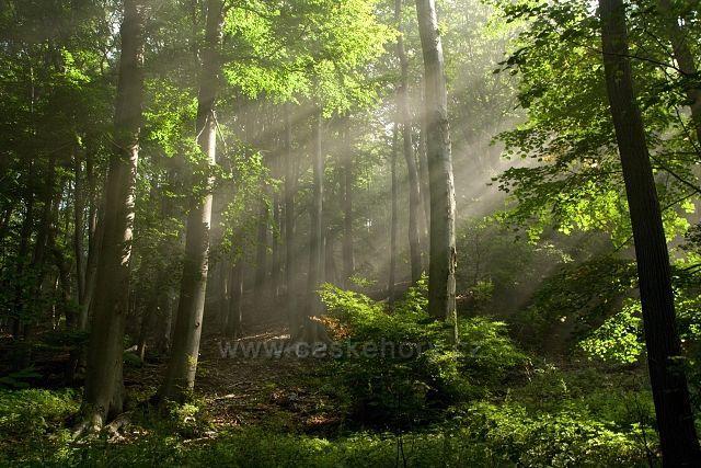 Bukový les pod Milešovkou