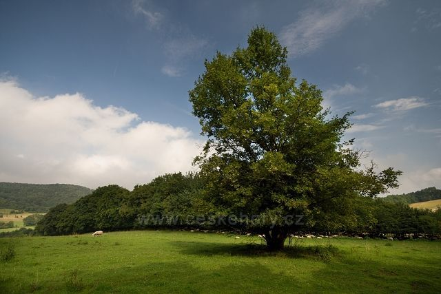 Pastviny nad Černčicemi