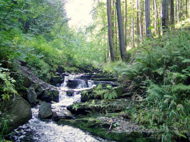 Potok Lomná-Beskydy