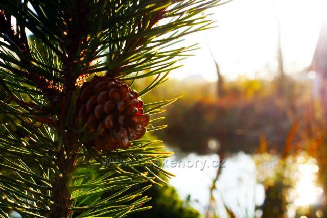 Šiška při západu podzimního sluníčka
