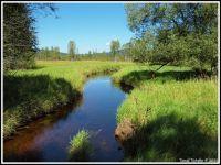 Šumava - Řasnice, nedaleko Dolního Cazova