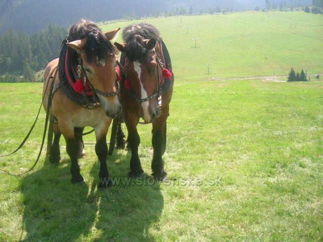 závody koňských vozatajů -Ždiar