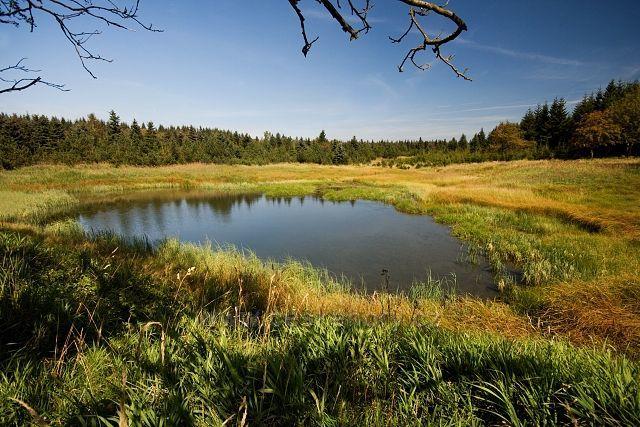 Malý Radní rybník