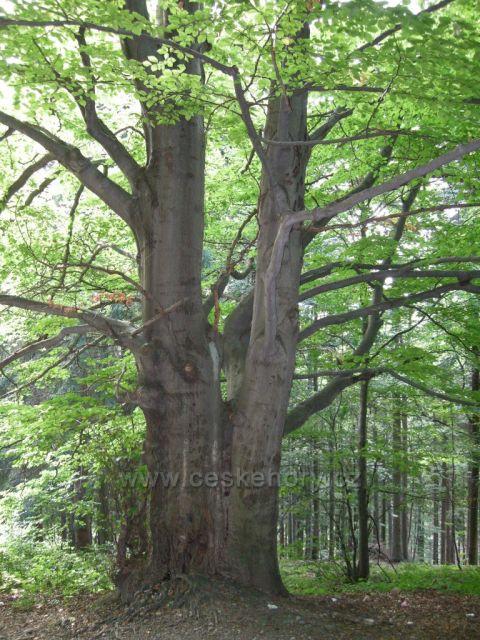 lesy kolem Boubína