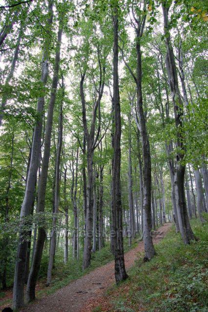 Les v okolí Jedlové