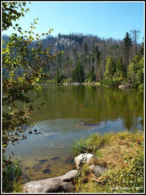 Šumava - Plešné jezero, 1090 m.n.m.