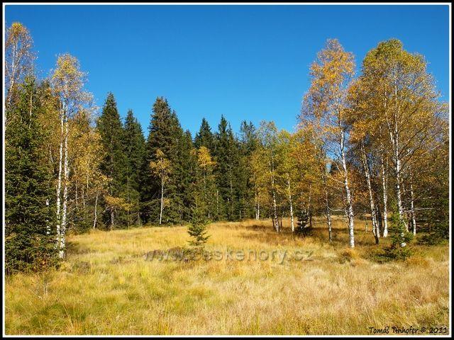 Šumava - podzimní atmosféra nedaleko Modravy