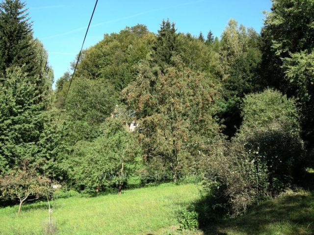 les na podzim