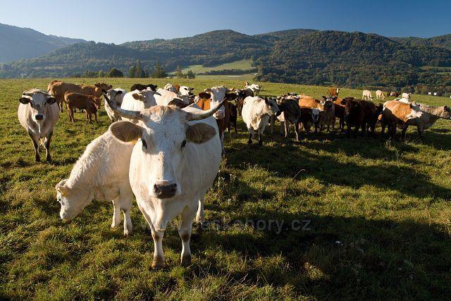Pastviny u Černýše