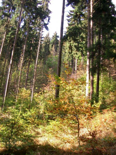 údolí Prunéřovského potoka