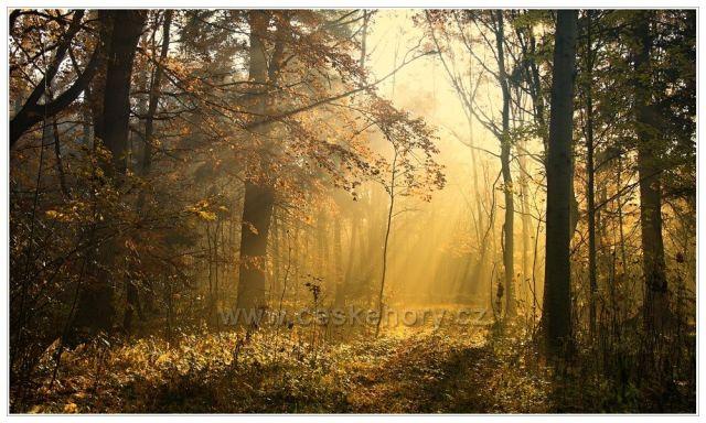 Tajemství podzimního lesa