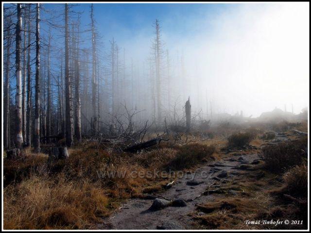 Šumava - vrchol Plechý (1378 m.n.m)