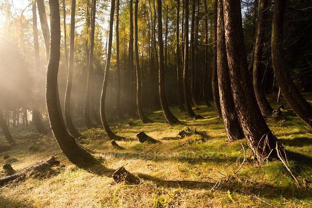 Opilý les