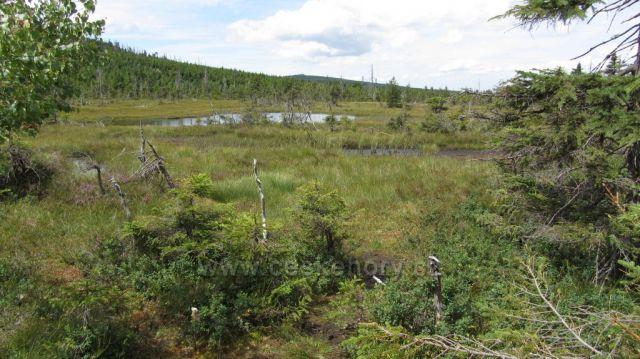 rašeliniště u Černého potoka
