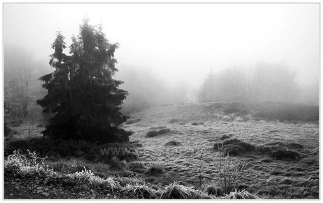 Z mlhy