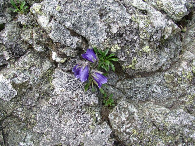 květiny kvetoucí na vrcholu Baníkova