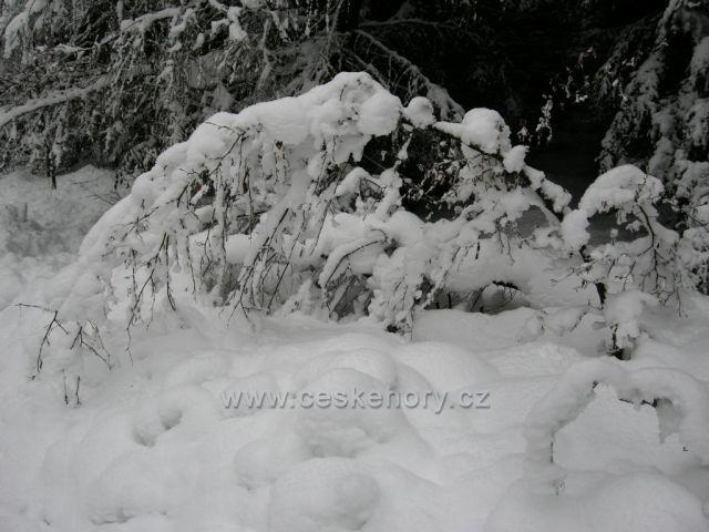 pod sněhem