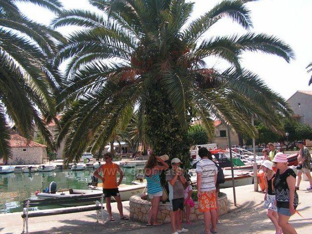 Ostrov Hvar....2009