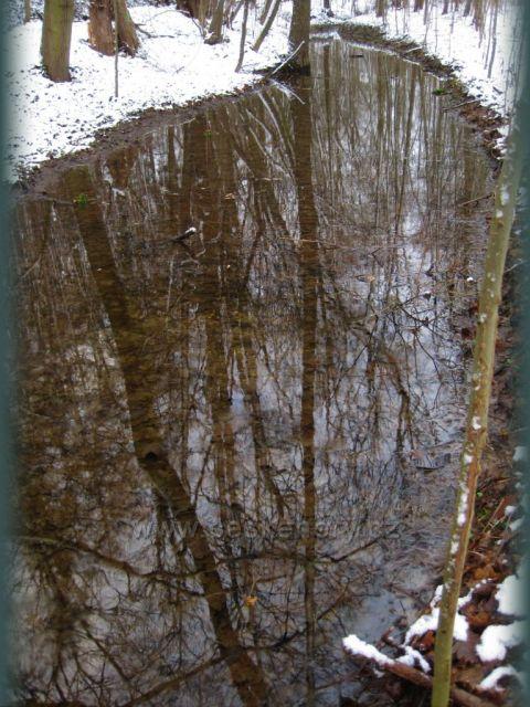 údolíčko v zimě