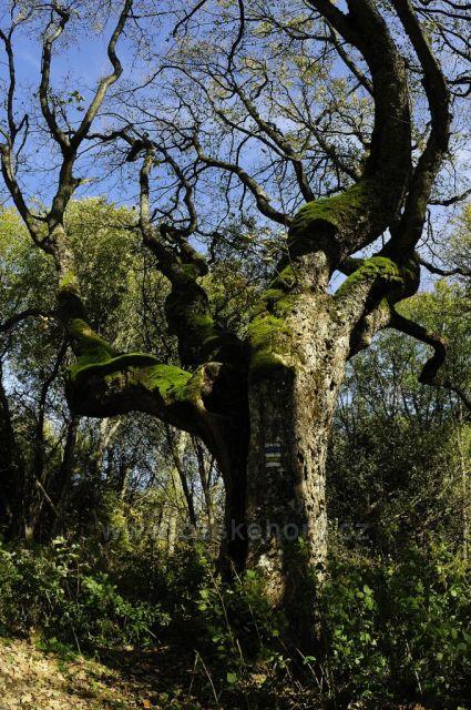 strom nad Hůrkou