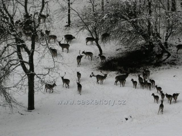 obora s lesní zvěří v zimě