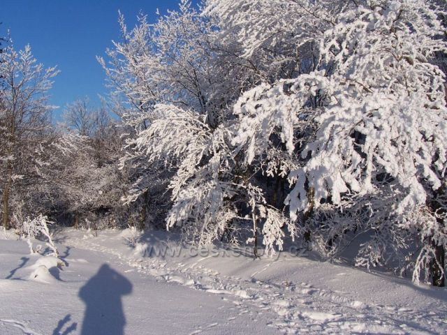 Království zimy
