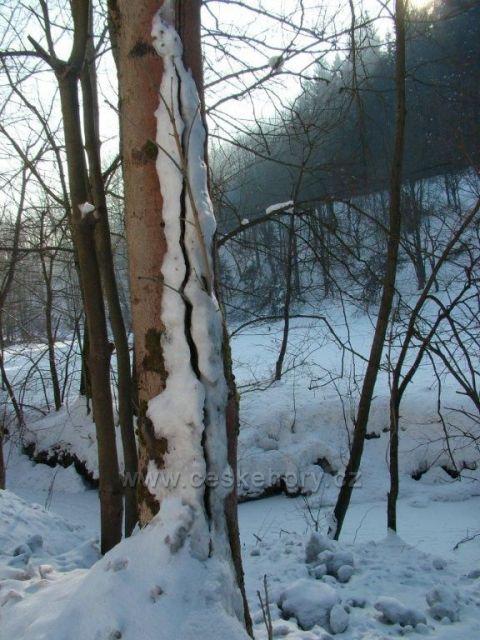 Zima v Jezerném