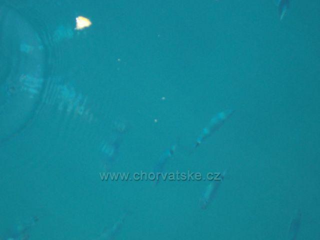 Gradac-makrely v moři