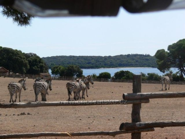 NP Brijuni - Safari