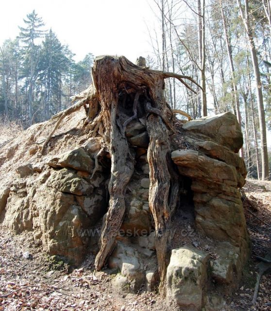 splynutí dřeva a kamene